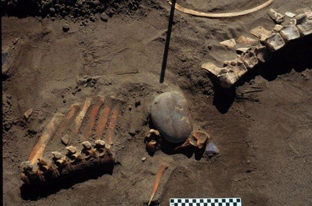 Huesos de caballo prehistórico