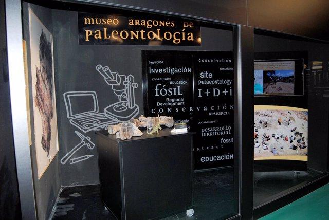 Dinópolis muestra sus últimos hallazgos del yacimiento de 'La Tejería'