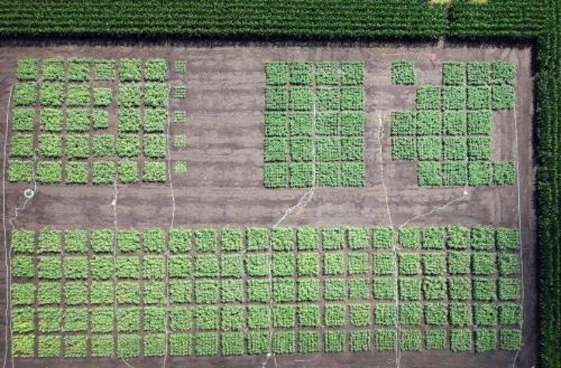 La fotosíntesis, clave para alimentar al mundo en 2050
