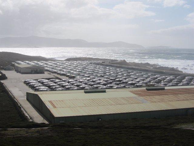Planta de acuicultura en la costa gallega