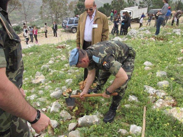 Reforestación en Líbano
