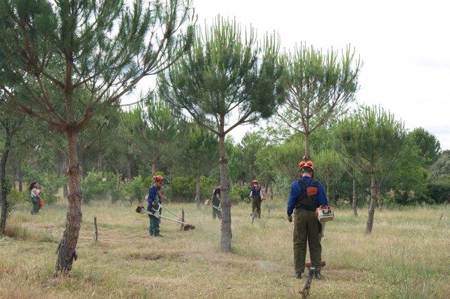 Cursos de formación de desbroce forestal
