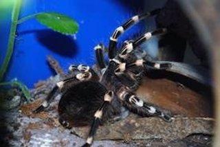 Exposición 'El fascinante mundo de las arañas y los escorpiones'