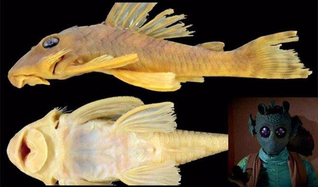 Espécie de peixe descoberta no Brasil ganha nome em homenagem a Star Wars
