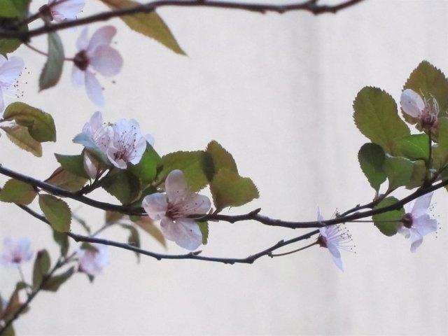 Flor, Primavera, Medioambiente