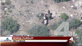 Varios policías propinan una brutal paliza a un hombre desarmado en California