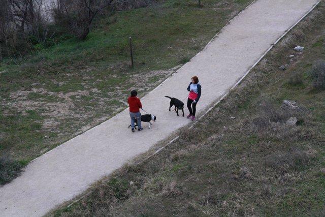 Perros, Paseando, Río Tajo, Animales