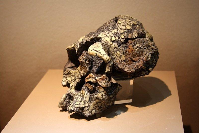 Hallan en Kenia herramientas homínidas  de 3,3 millones de años