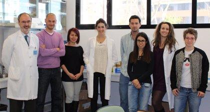 Descubren una nueva diana terapéutica para la fibromialgia