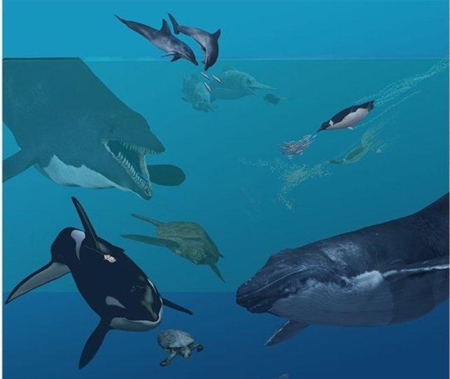 Mamíferos marinos y anfibios