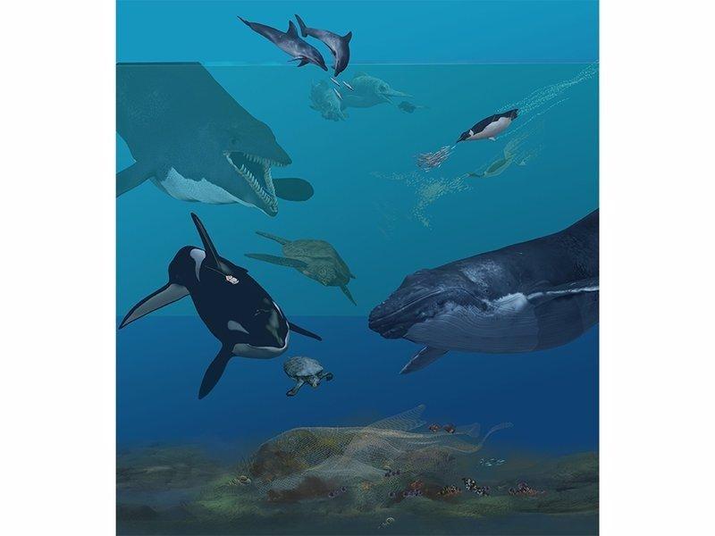 Cómo especies terrestres acabaron viviendo en el mar?