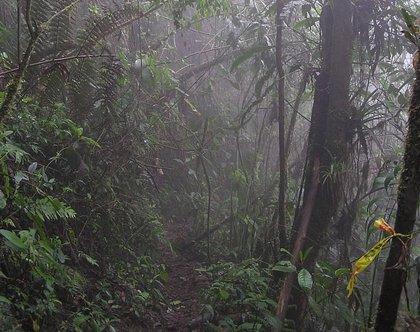 Las FARC condenan el asesinato de una familia de indígenas en el Cauca