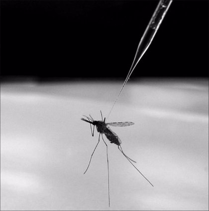 Se reducen un 47% las muertes por malaria en 15 años