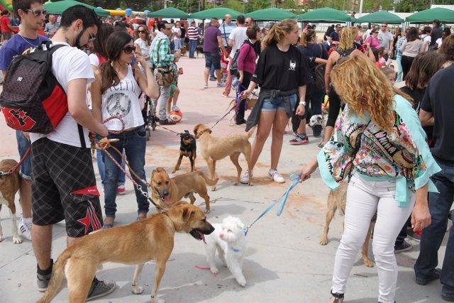 I Feria Perruna y Gatuna de Paterna
