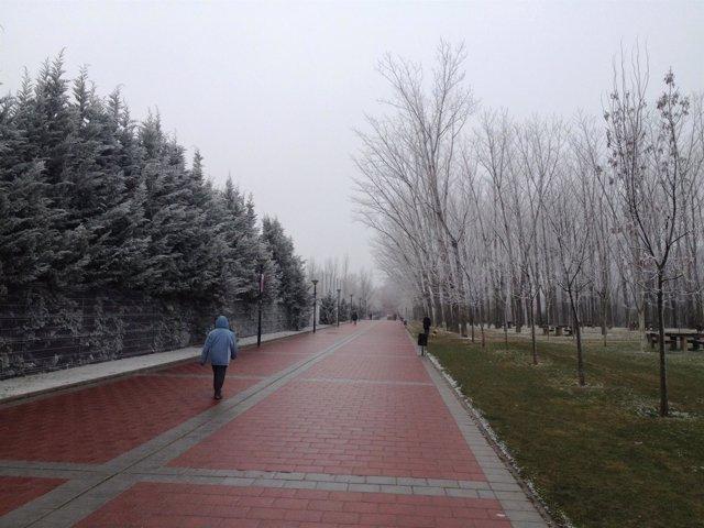 Frío y niebla en Valladolid