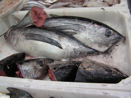 España comienza a devorar el pescado ajeno tras comer el propio