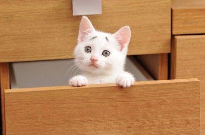 Este es Gary, el gato que parece preocupado por una cuestión de cejas