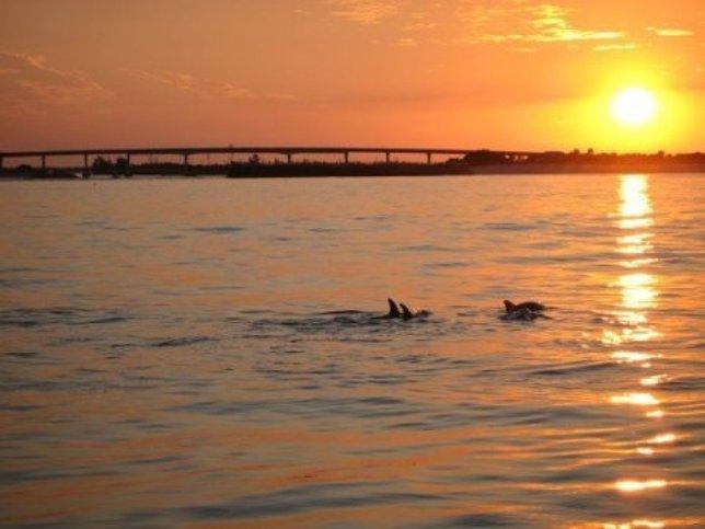 Delfines en Florida