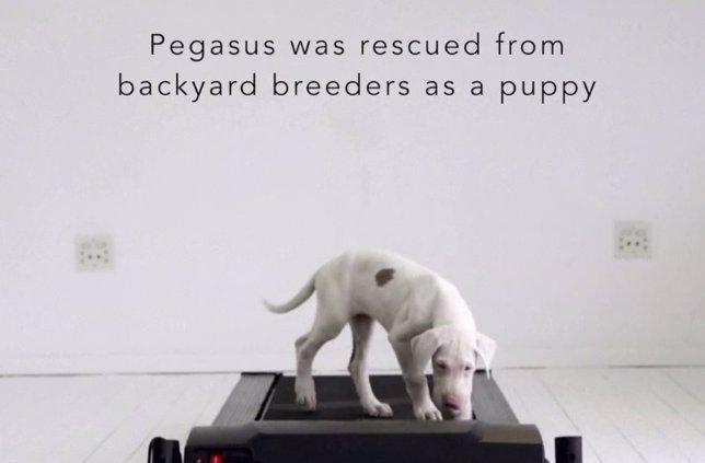 Pegasus, el vídeo en time-lapse de su crecimiento