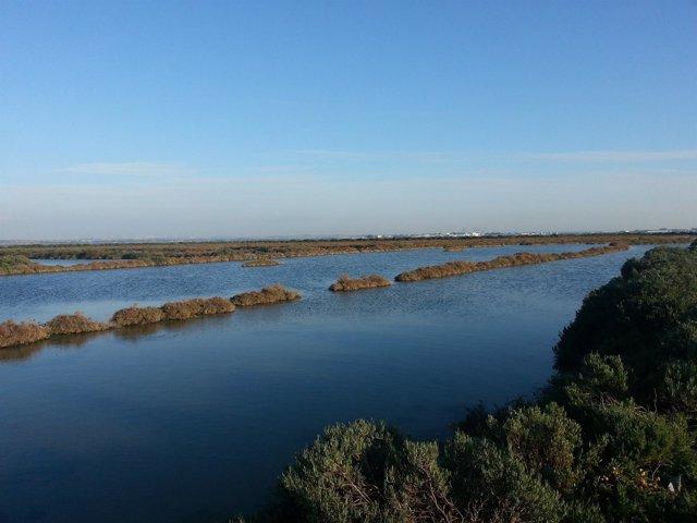 Salinna La Covacha, en el Parque Natural Bahía de Cádiz