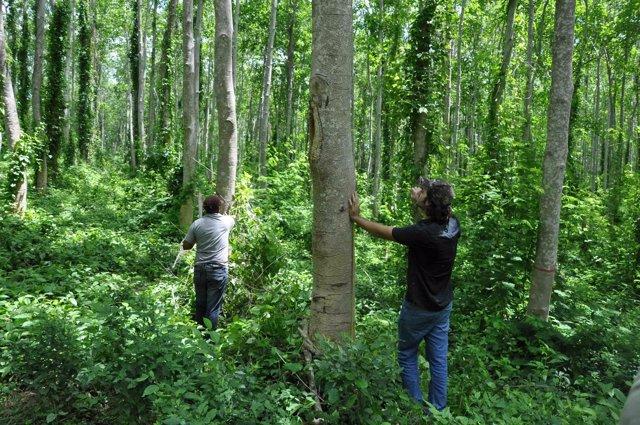 Bosque reforestado por Faber-Castell en Colombia