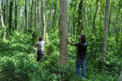 Ecuador logra un récord Guiness de reforestación