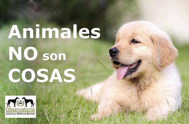 Campaña del Observatorio de Justicia Animal