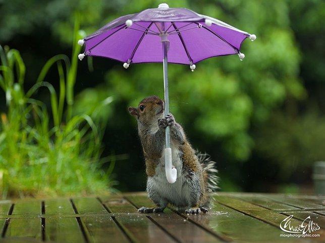 Ardilla refugiándose de la lluvia con un paraguas