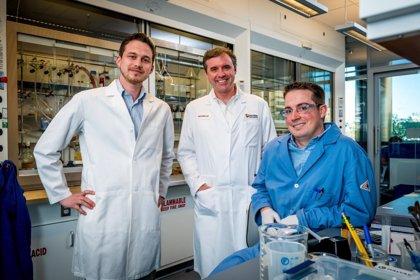 Investigan una nueva estrategia para 'desintengrar' células cancerosas