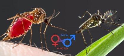 Combatir el dengue combatiendo al mosquito
