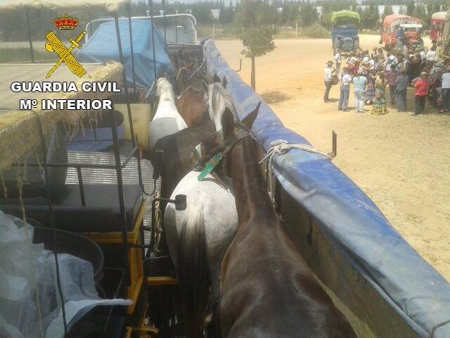 Caballos transportados de forma irregular