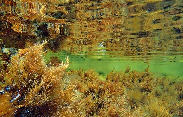Franja marina donde rompen las olas