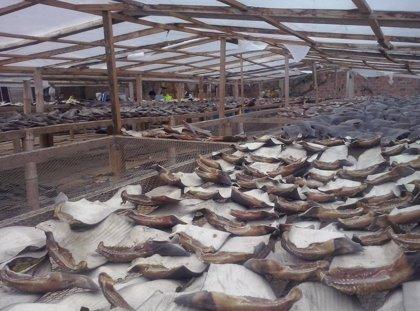 La Policía de Ecuador decomisa a delincuentes 200.000 aletas de tiburón