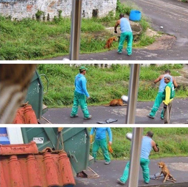 Un basurero tira al triturador a un perro