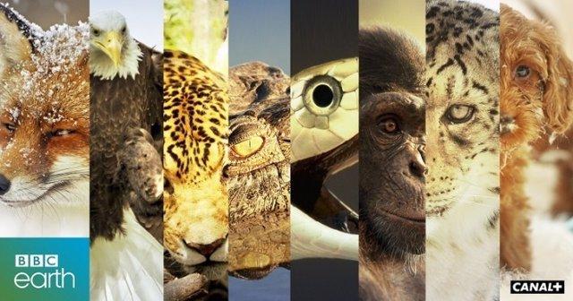 Canal+ emitirá los documentales de la BBC Earth