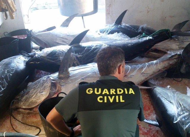 La Guardia Civil decomisa en aguas de San Pedro del Pinatar ocho atunes rojos