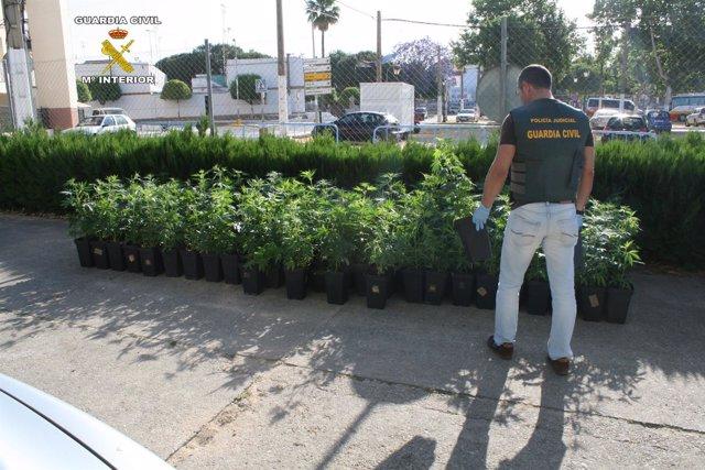 Dos detenidos por tráfico de drogas