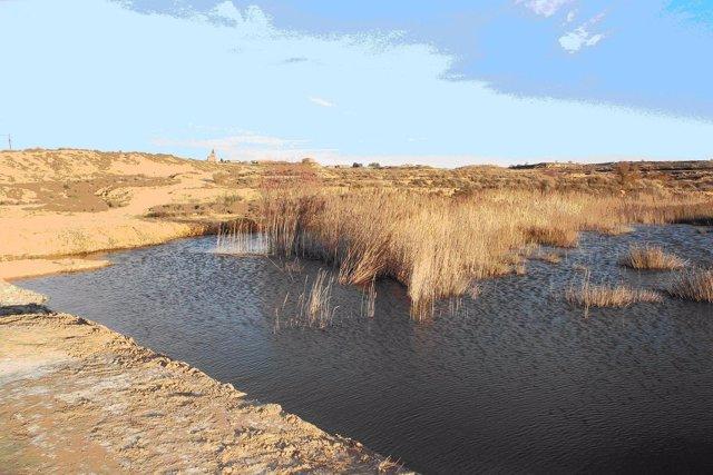 La Comarca de Los Monegros celebra el Día Mundial del Medio Ambiente