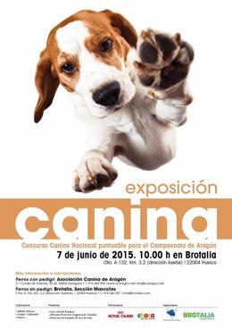 El centro de jardinería de Atades Huesca celebra su primer evento canino