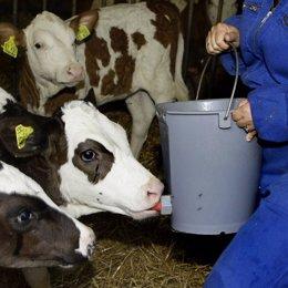 Imagen de una vaca