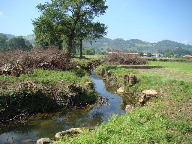 Tala de árboles en el río Campiazo