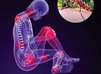 Alerta en Perú para prevenir una epidemia de Chikungunya