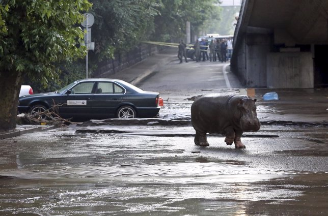 Más de 30 animales peligrosos deambulan por las calles de Georgia tras las inund