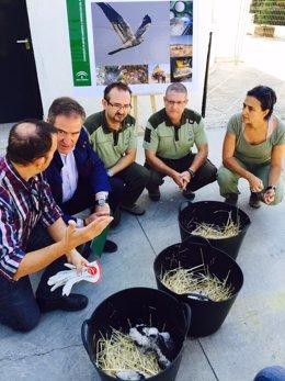 Quirós (2i), junto a personal del programa, con polluelos de aguilucho cenizo.