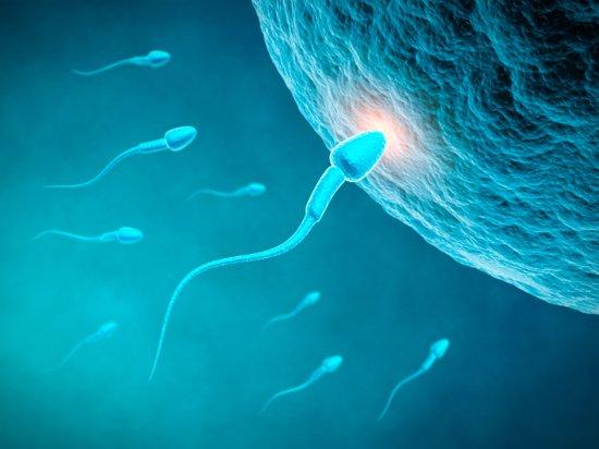 Desarrollo del bebé en la semana 1- 4 de embarazo