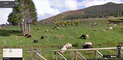 Google Maps reúne a todas las ovejas del mundo en el Tumblr de Google Sheep View