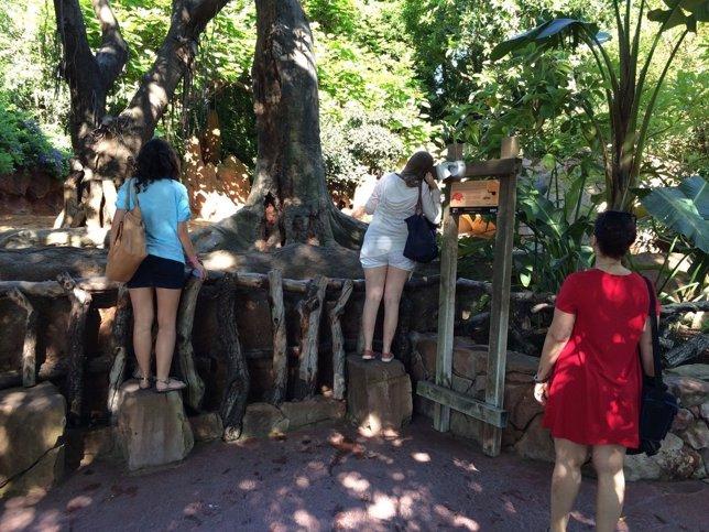 Turistas visitantes viajeros personas ocio parque temático naturaleza pájaros