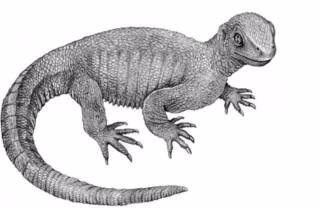 Eslabón perdido en la evolución de las tortugas