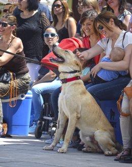 Desfile de perros abandonados en Valencia