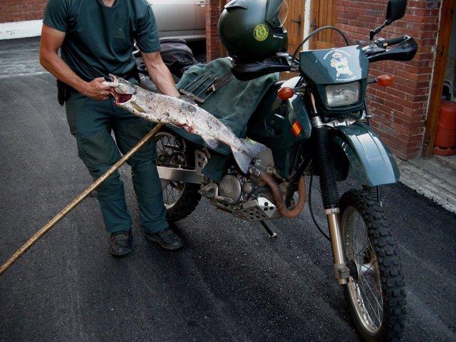 El salmón pescado ilegalmente